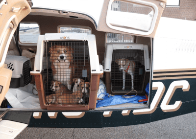 3/23/12 – 11 Dogs