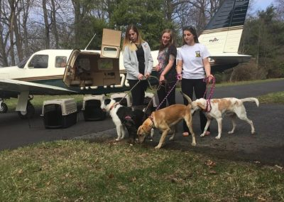 3/16/16 – 4 Dogs