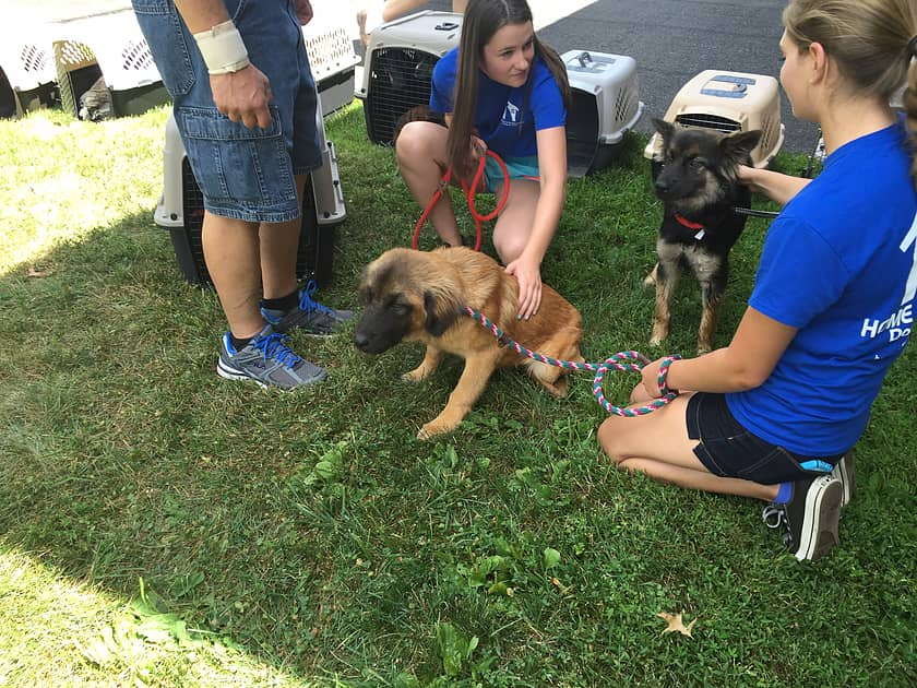8/9/15 – 20 Dogs